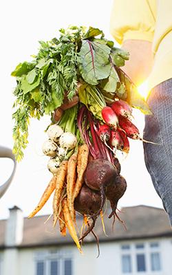 veggiegarden-250_2