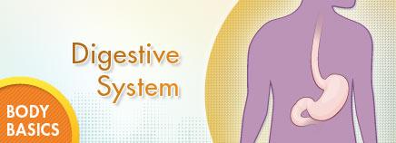 P-digestiveBB-enHD-AR1